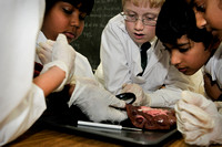 Disecting a Liver - Grade 5-8
