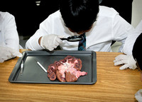 Disecting a Liver - Grade 5-1